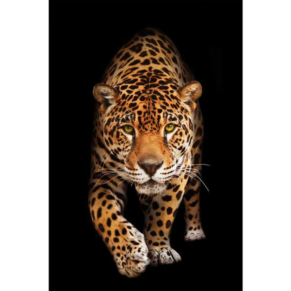 Spotted Wild Cat - Panther 80x120x2cm Dibond